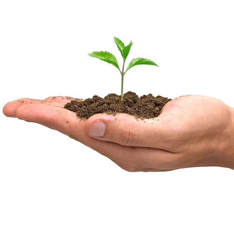 seedingPlant480x480