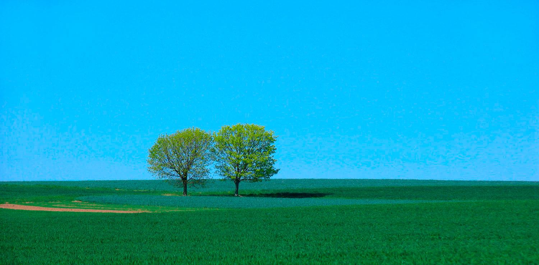 treesSky2700x1332blue
